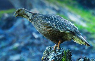 Vogelbeobachtung in Armenien