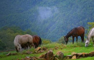 Horse Riding Tour in Armenia